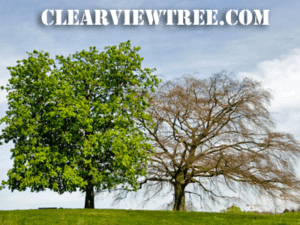 Tree Removal Services NYC
