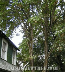 Tree Pruning NYC