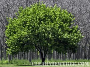 Tree Services NYC
