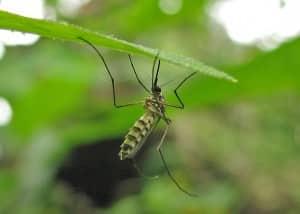 Mosquito Control NYC & LI