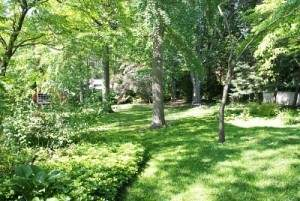 tree fertilization services long island ny