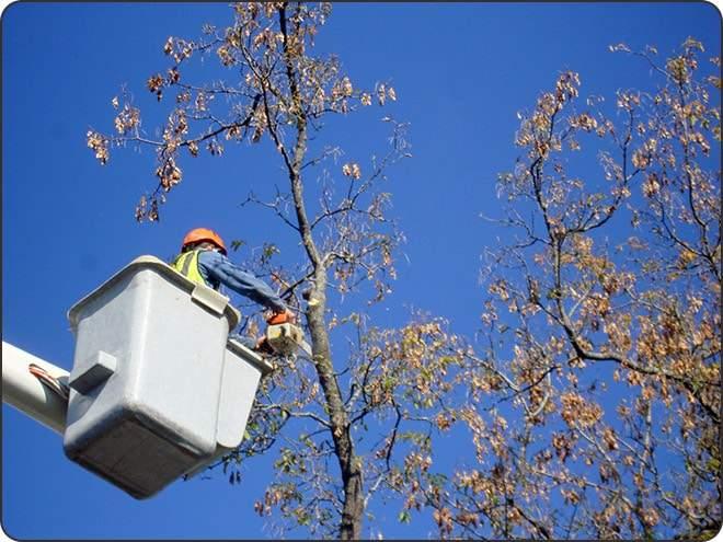 ny tree pruning