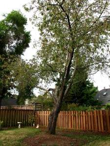 tree structure evaluation Long Island
