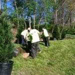 tree planters - cleareview