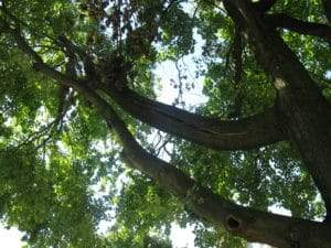 CT Tree Trimming (016)