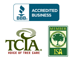 clearview certifications
