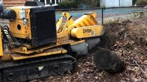 Nassau County stump grinding services
