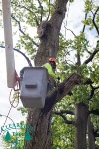 tree surgeon in bucket