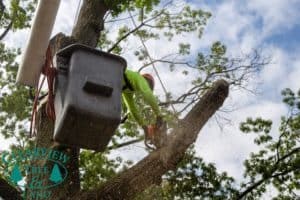 tree worker with chainsaw cutting down large branch