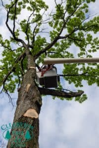 residential tree pruner NY