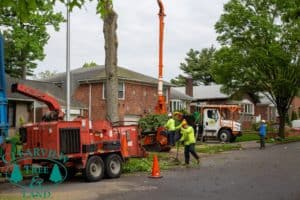 Nassau County Tree Services Project