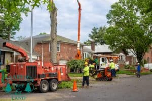 Long Island NY Tree removal project