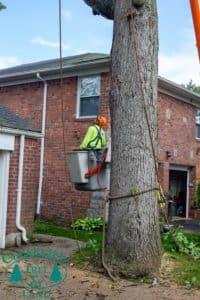 Suffolk County tree climber inside bucket