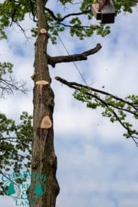 residential tree branch removal