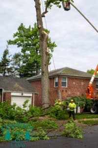 residential tree pruning NY