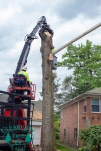 Nassau County Tree Bucket Truck Worker