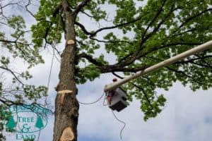 Commercial Tree Services NY