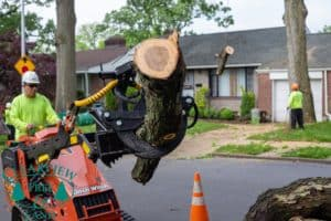 Suffolk County tree branch removal with equipment