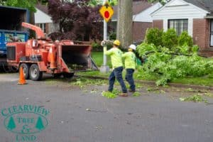 Long Island tree workers carrying dead tree branch