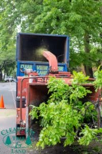 Suffolk County tree removal via wood chipper
